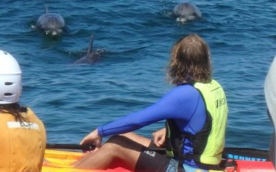 Spiritual Connection with a Dolphin